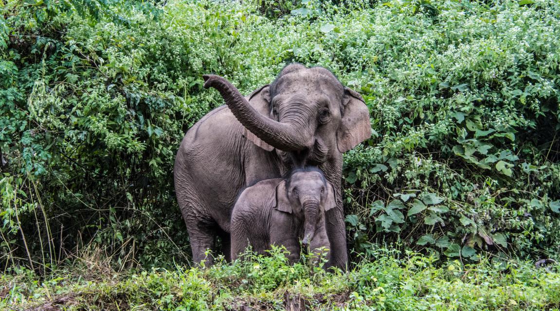 Éléphants d'Asie: ma mission de volontariat en Thaïlande