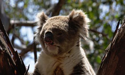 Animaux sauvages en Océanie: une faune captivante et abondante