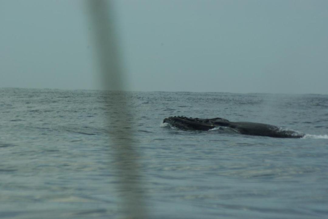 rencontre avec une baleine à madagascar
