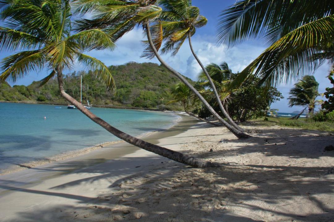 paysage des caraibes, sur une île des grenadines