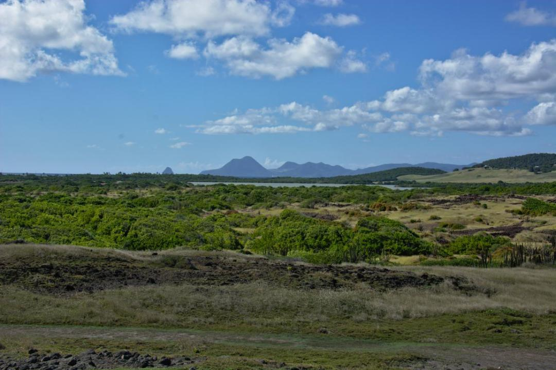 paysage unique de la Savane des Pétrifications en Martinique