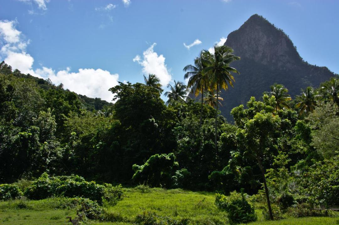 sainte lucie et sa végétation typique des caraibes