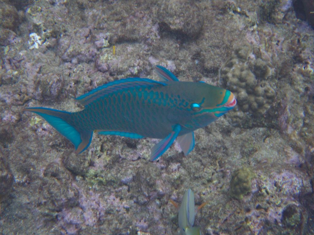 snorkeling dans les eaux de sainte lucie dans les caraibes