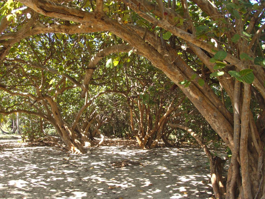 Végétation martiniquaise dans les Caraïbes