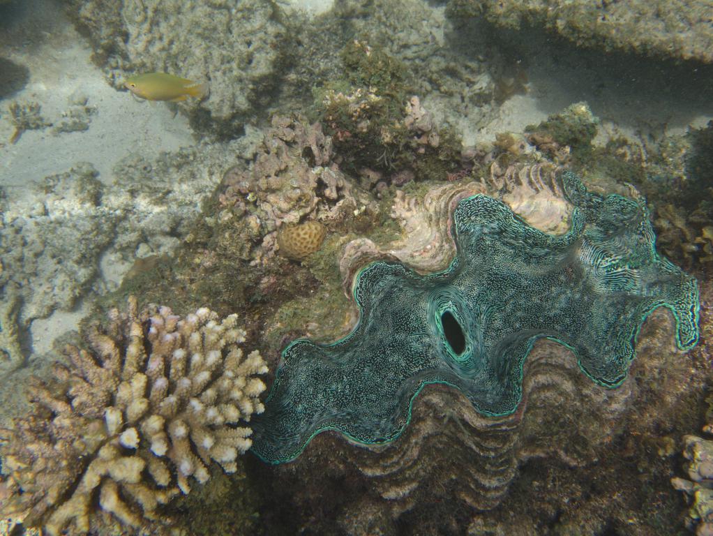 les fonds marins de la barrière de corail