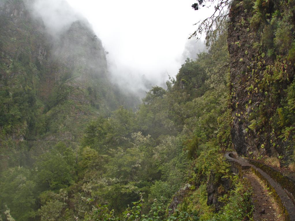 levada dans la forêt primaire de Madère