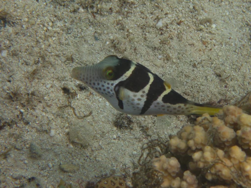 snorkeling à ningaloo reef