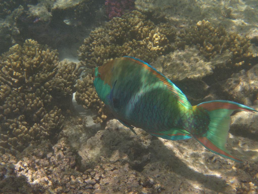 poissons colorés sur la barrière de corail