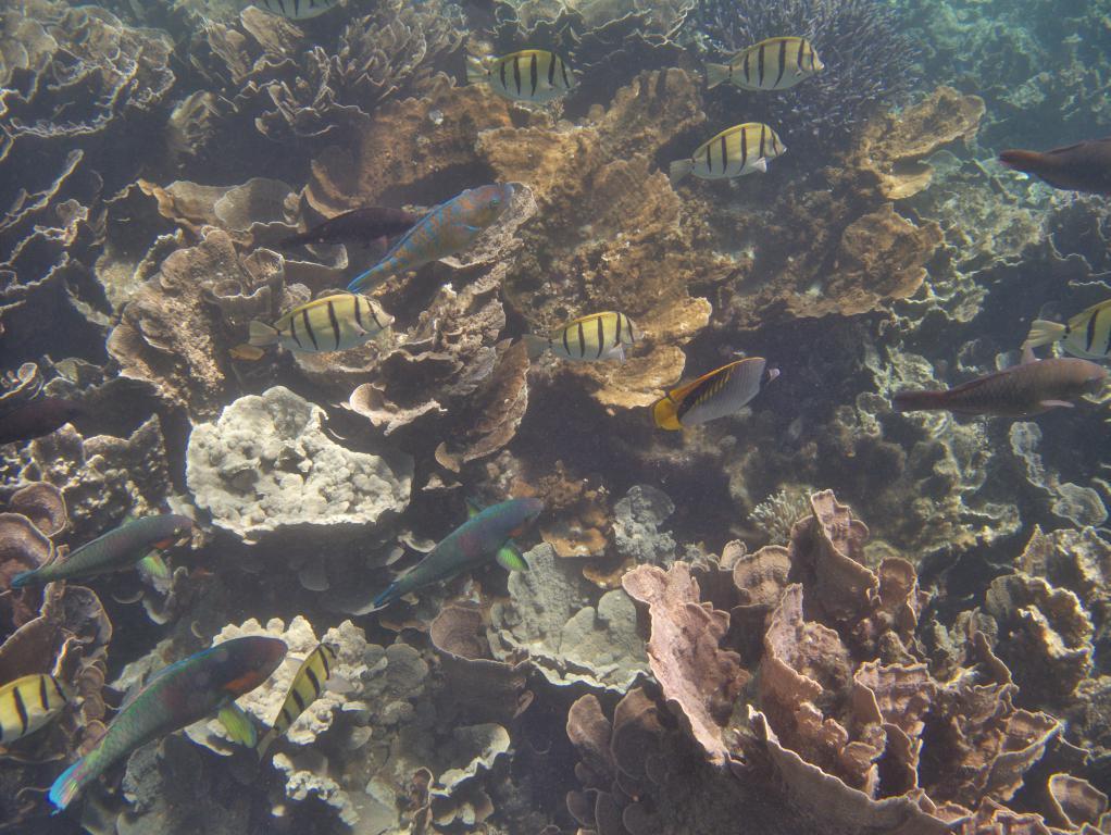 splendide snorkeling près de la barrière de corail en australie
