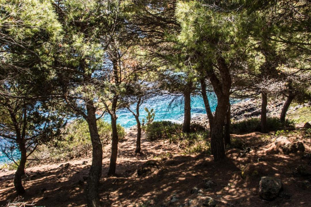 foret méditerranéenne à ustica en sicile