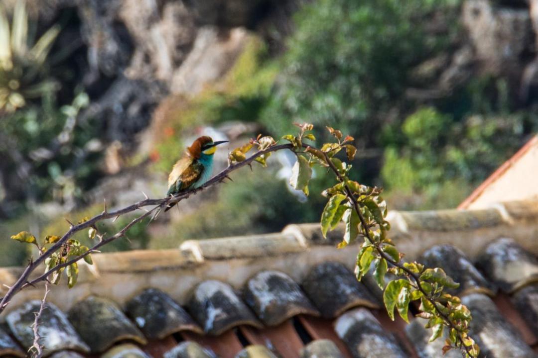 oiseau sur l'ile d'ustica en sicile