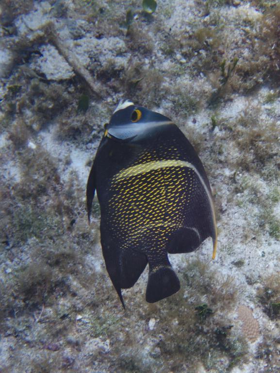 snorkeling cozumel peninsule yucatan