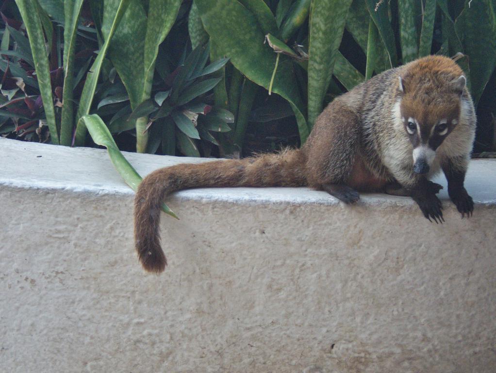 animaux tulum peninsule yucatan