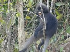 Koh Lanta -Estos monos, sin embargo eran más tímidos y majetes