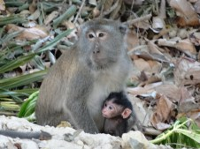 Koh Lanta - Mono cabrón con su futuro cabrón agarrado. Bonita imagen. Si los conociérais...