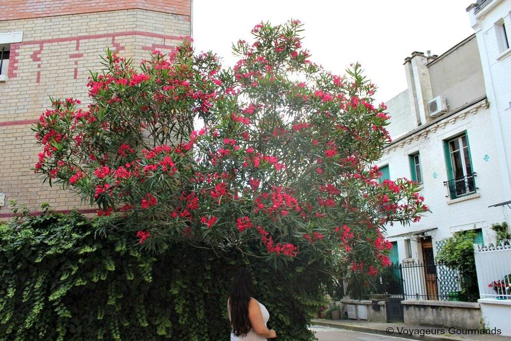 cite-florale-4