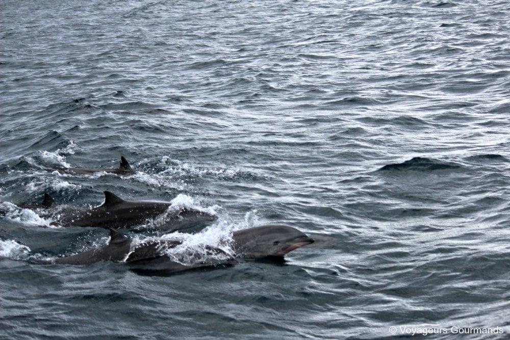 dauphins-en-martinique-18