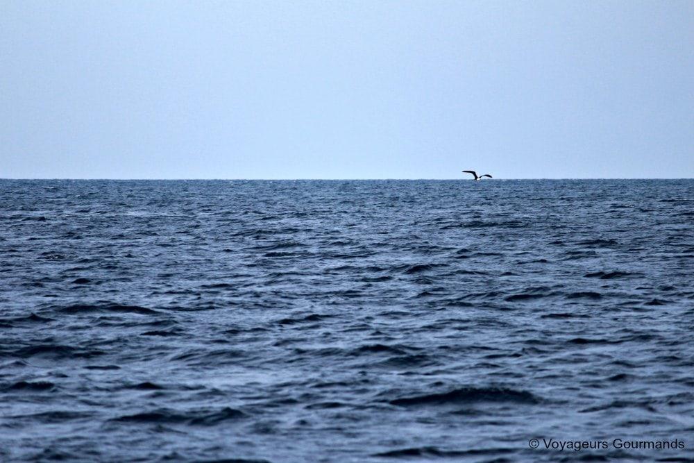 dauphins-en-martinique-2