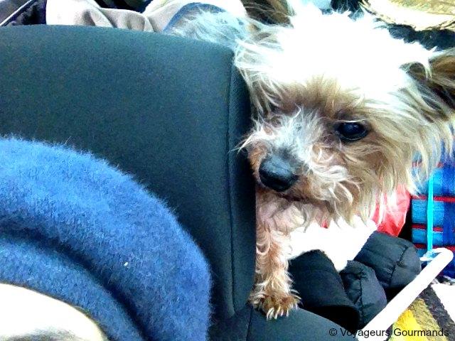 voyager avec son chien en voiture nos conseils blog voyages. Black Bedroom Furniture Sets. Home Design Ideas