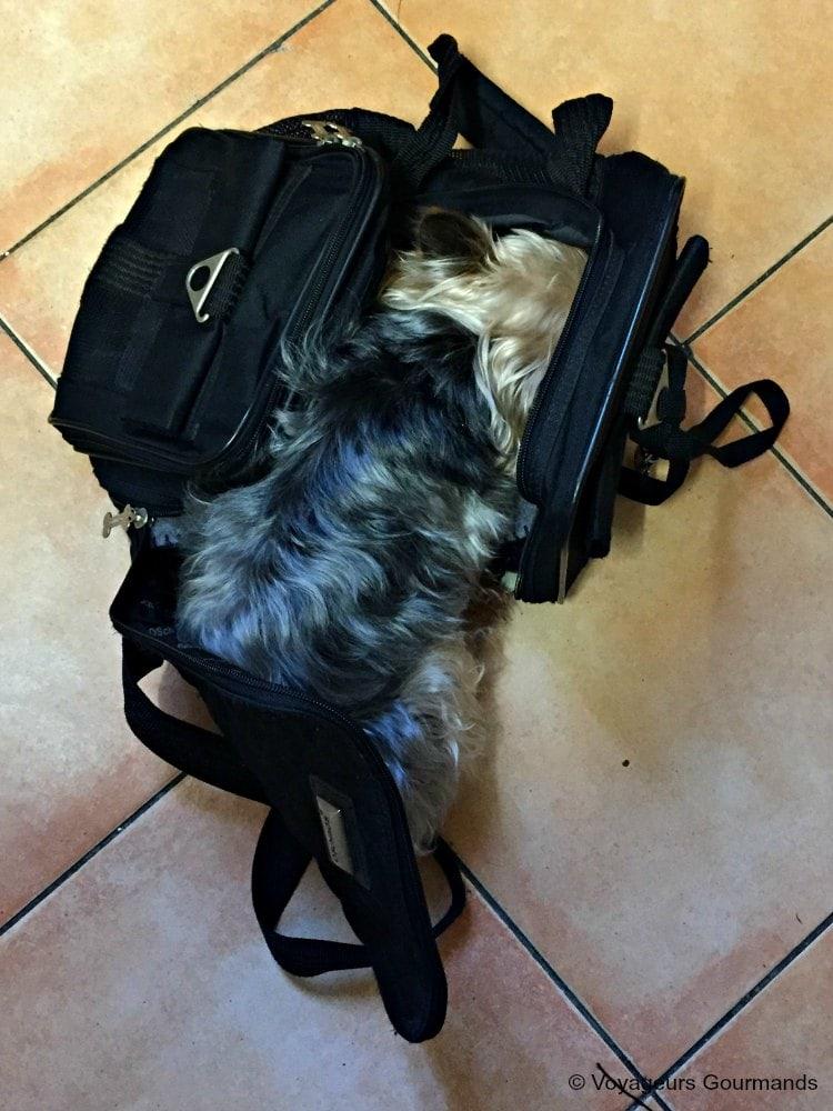 Voyager en voiture avec son chien