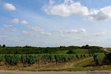Pouilly Sur Loire : Immersion au pays du pouilly fumé