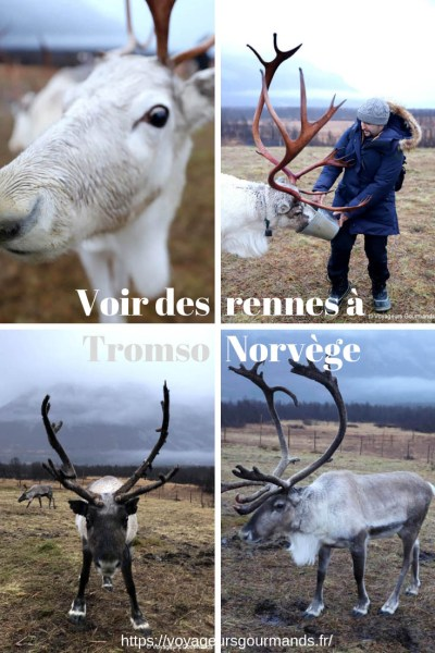 oir des rennes à Tromso en Norvège