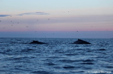 orques et baleines en norvege (31)