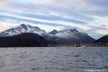 orques et baleines en norvege (5)