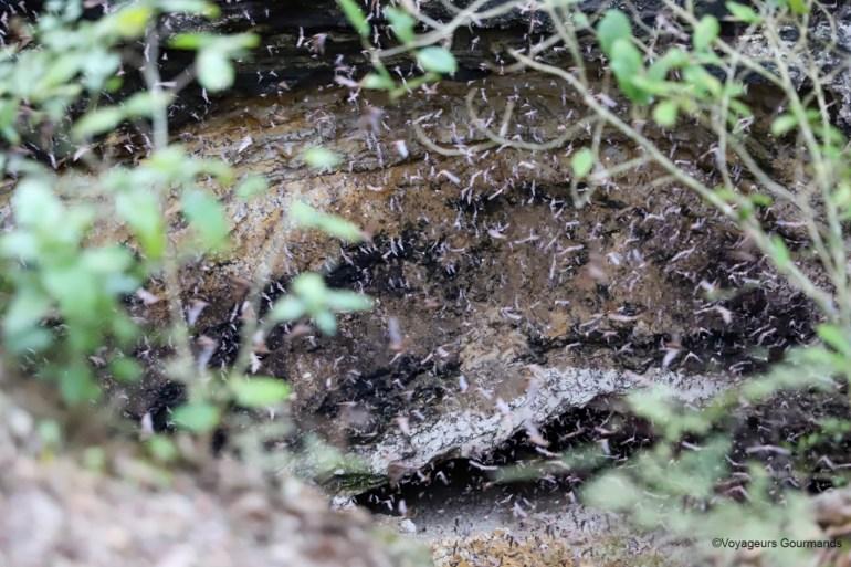 visiter calakmul chauves souris