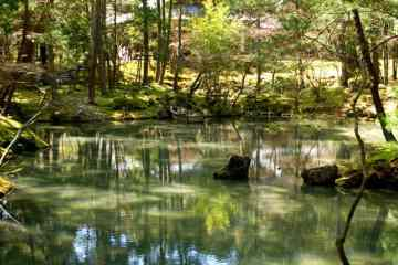 kyoto jardin de mousse