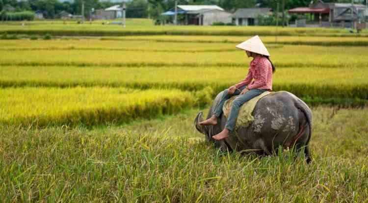 vientam rizières muons lo