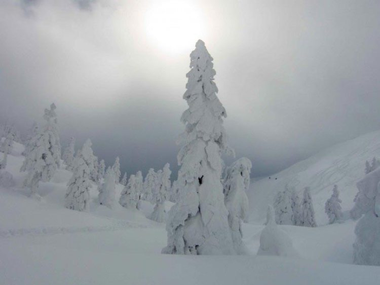 snow monsters hakkoda japon