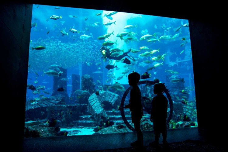 dubai the palm aquarium