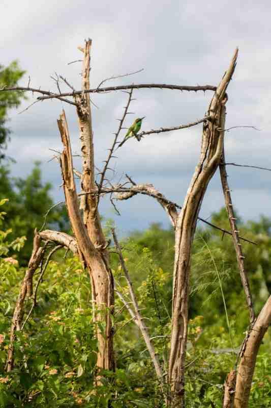 Udawalawe est riche en oiseaux