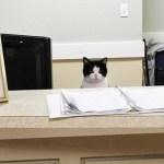 Hemlös katt smög in på äldreboende och fick ett jobb!