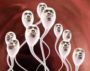 Через какое время происходит восстановление спермы