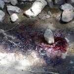 Cae de un puente y muere joven en San Juan del Río