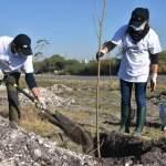 Continúan reforestando sobre Libramiento Bicentenario, Pedro Escobedo