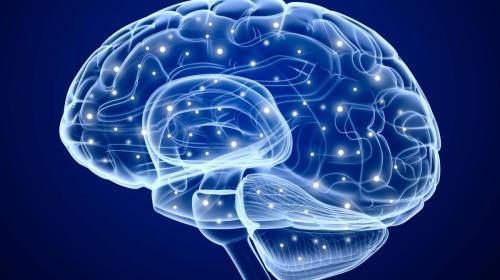 Todo sucede en el cerebro