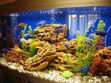 Камни для аквариума: виды, применение и уход kamni dlya akvariuma vidy vybor i primenenie 5 AquaDeco Shop