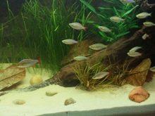 Как выбрать аквариумный грунт: виды, советы и правила grunt dlya akvariuma vidy vybor i primenenie 6 AquaDeco Shop