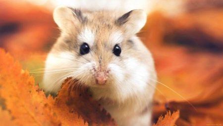Wie viele Hamsters leben?