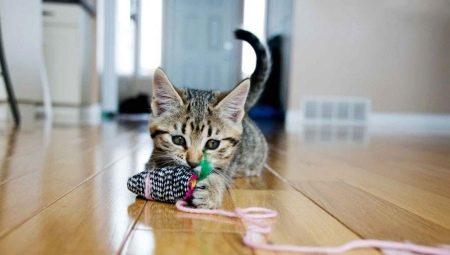 Как сделать игрушку для кошки своими руками?