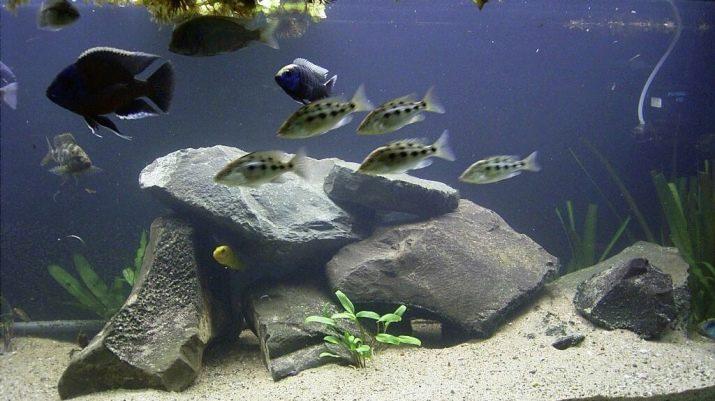 Камни для аквариума: виды, применение и уход kamni dlya akvariuma vidy vybor i primenenie 26 AquaDeco Shop