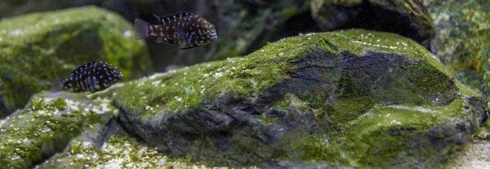 Камни для аквариума: виды, применение и уход kamni dlya akvariuma vidy vybor i primenenie 28 AquaDeco Shop