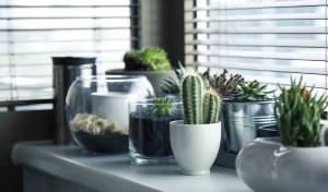 Damesarmband met Cactus