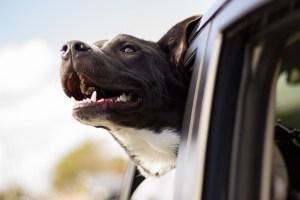 Autostoel voor honden