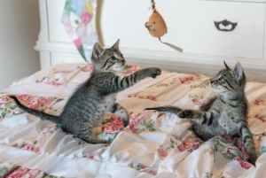 automatisch kattenspeelgoed