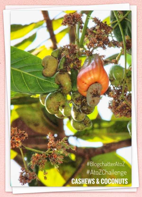 Cashews Coconuts
