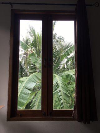 Вид из нашего окна на пальмы
